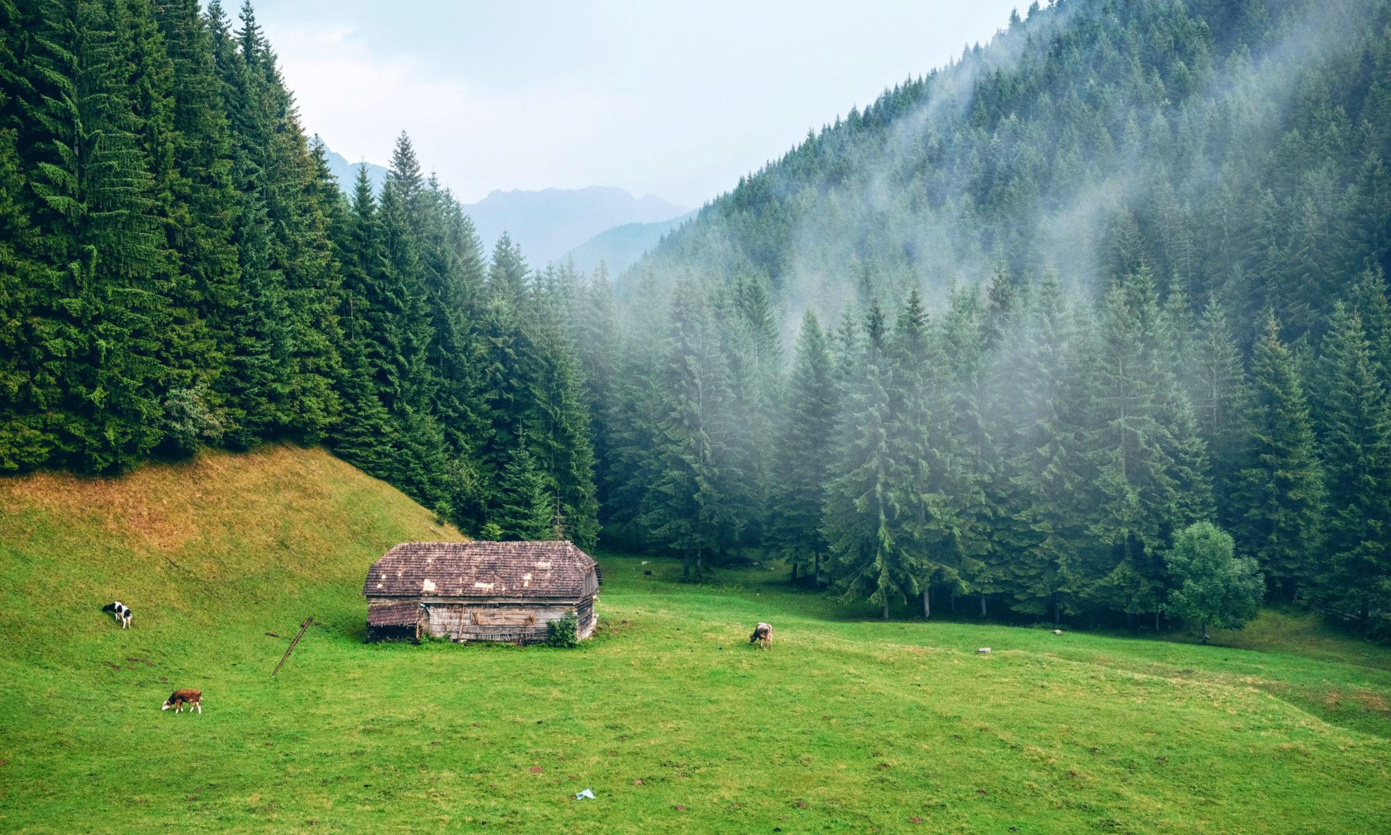 Forrest in Romania