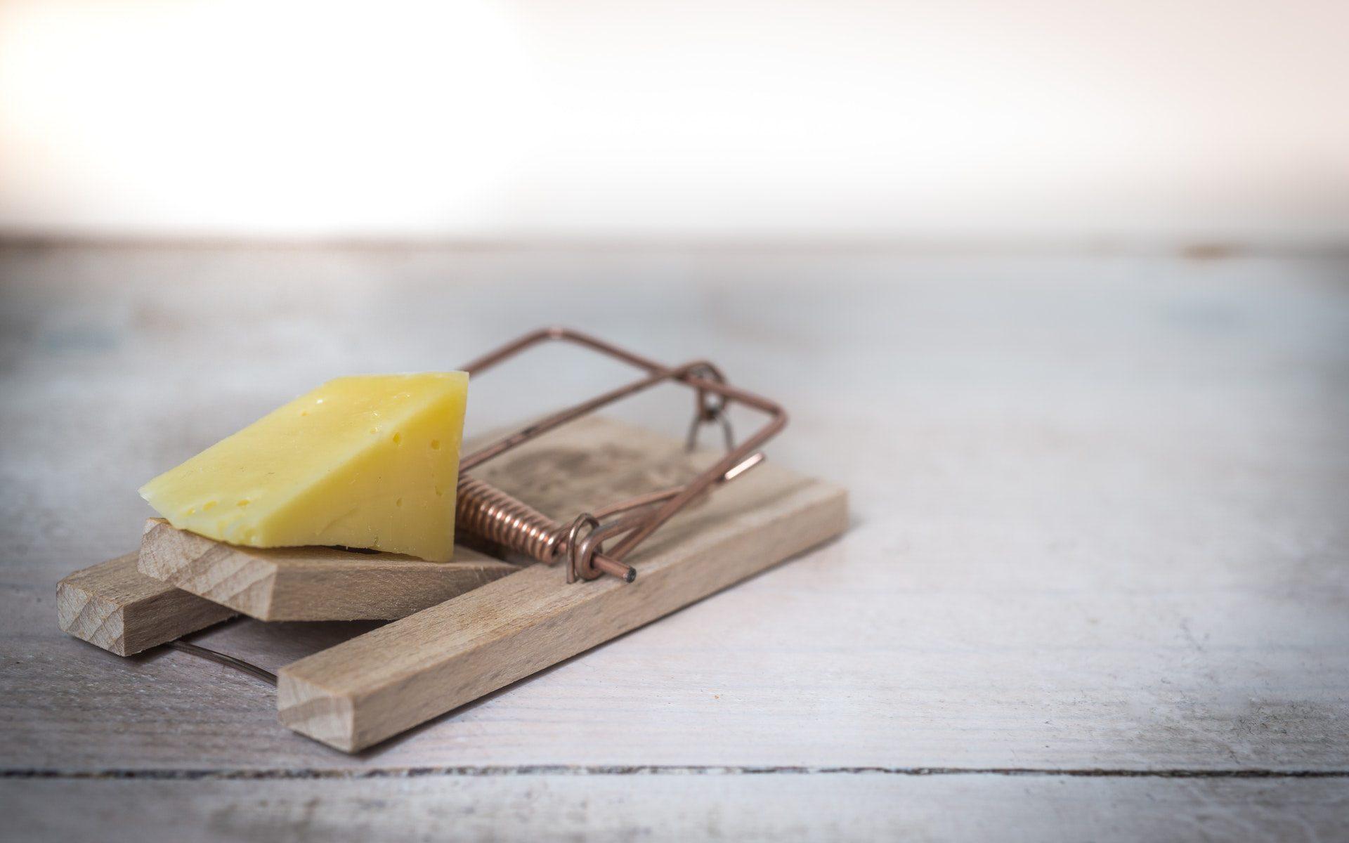 Zadarmo je len syr v pasci na myši
