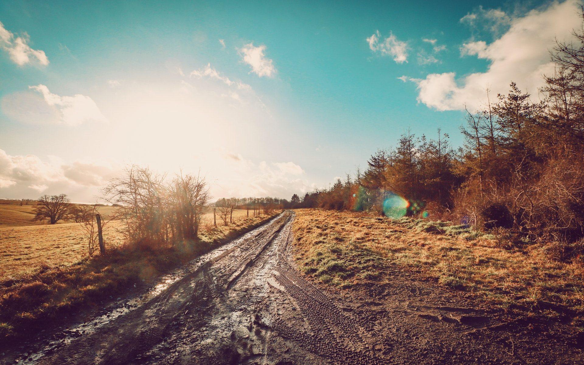 Blatistá cesta