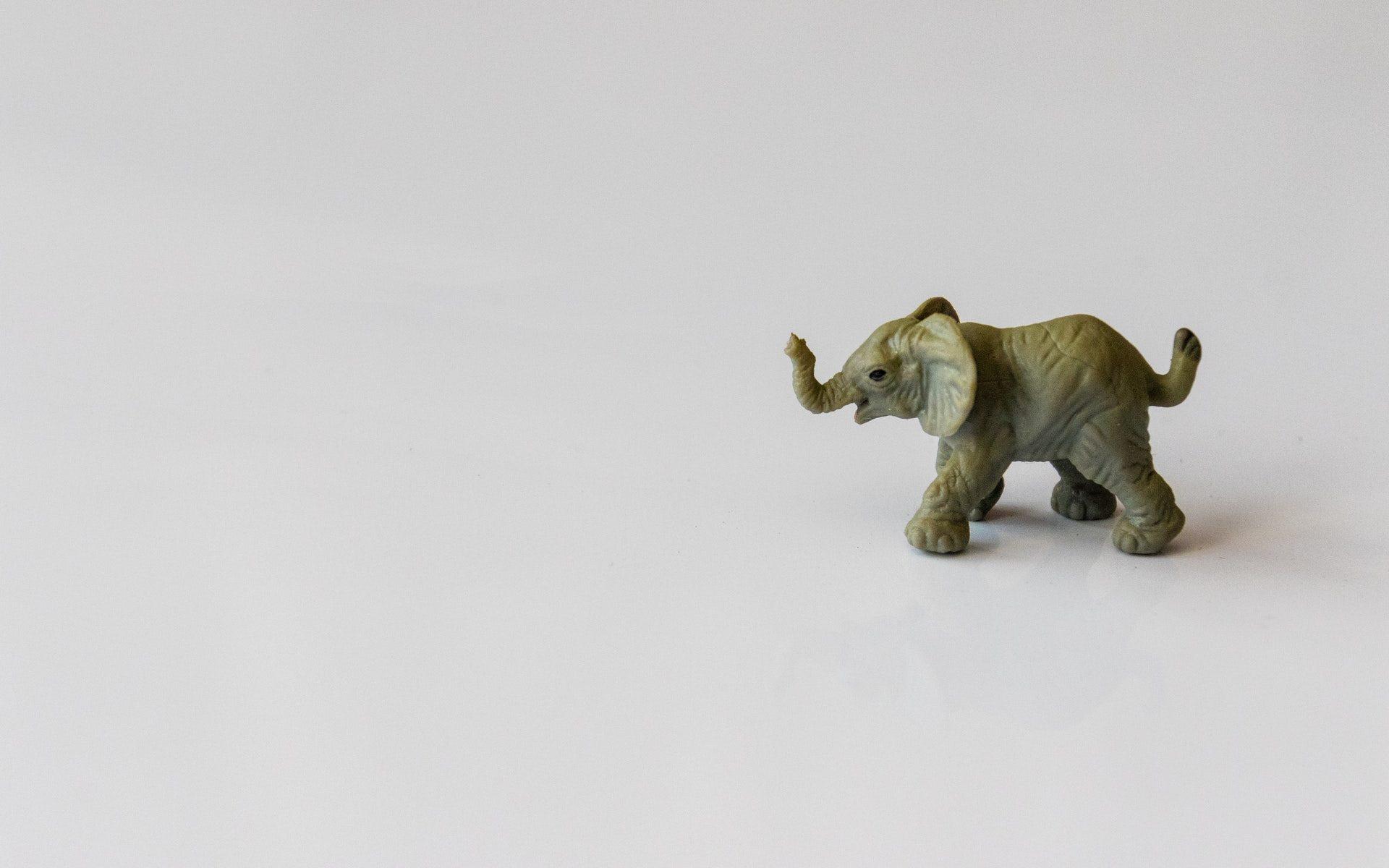 Malý slon