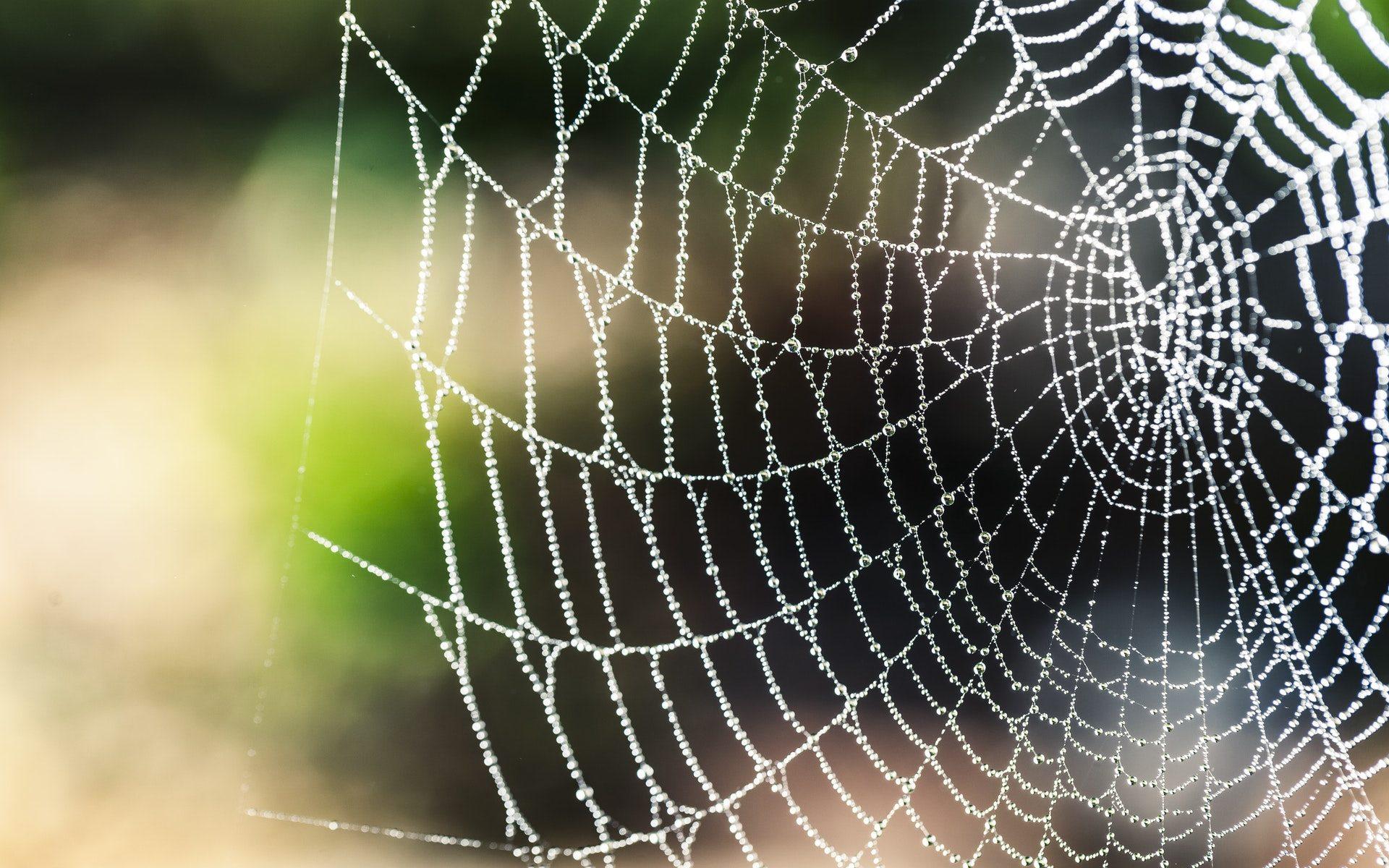 Pavučina a sieť